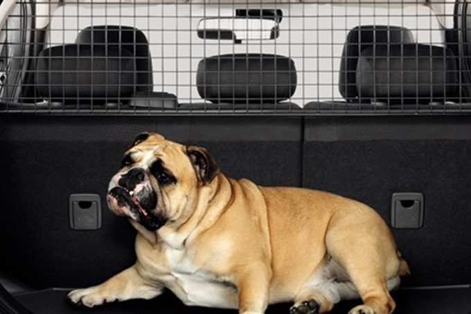 Nissan LEAF - Interior - Dog guard